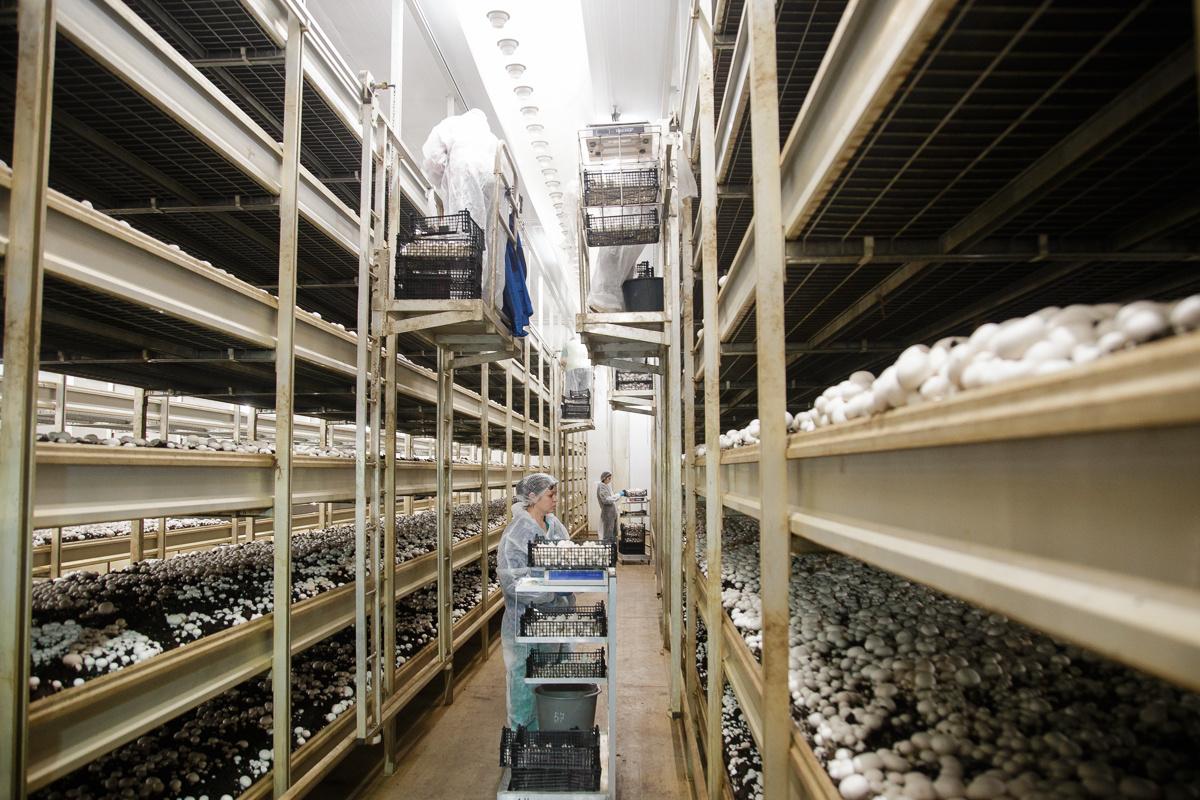 Монтаж ворот специального назначения на предприятии по промышленному  выращиванию грибов ООО